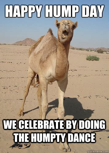 Happy Hump Day Meme - 23 very funny camel meme photos and images