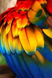 colorful feather 25 best ideas about colorful feathers on