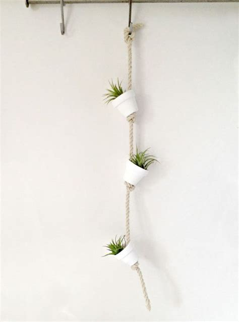 hanging air plant pure white clay pot with air plants hanging from hemp rope