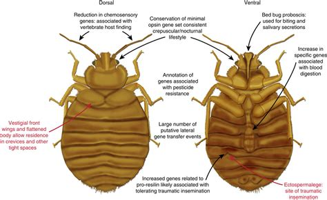 bed bugs packtite sc at they do not generally