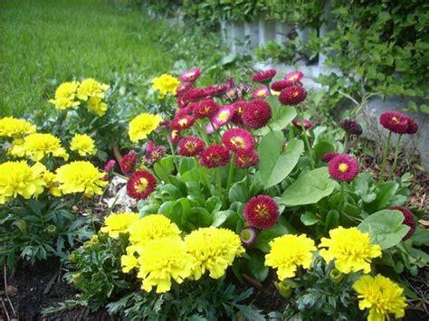 fiori giardino perenni fiori da bordura piante perenni fiori da bordura