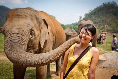 ethical elephant sanctuaries  thailand chiang mai
