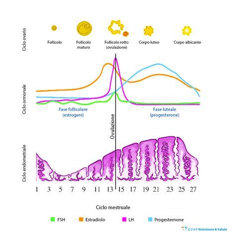 ciclo mestruale e alimentazione livelli ormonali ciclo mestruale farmaci per