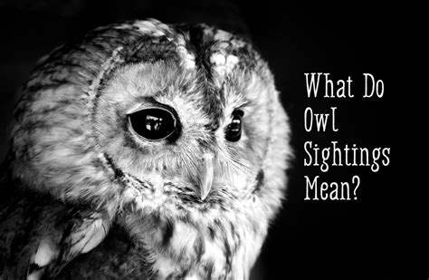 owl symbolism pure spirit owl symbolism what does it mean when you see an owl