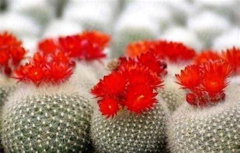 Bibit Kaktus Dan Sukulen mengatasi hama pada kaktus dan sukulen bibit
