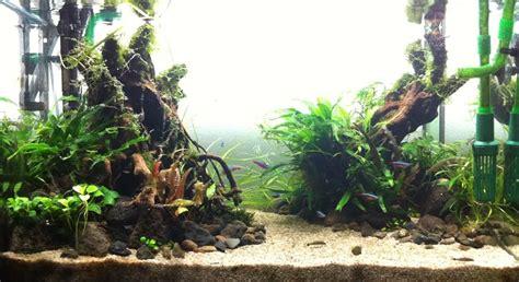 cara membuat aquascape pemula cara membuat aquascape mu cantik aquascape indonesia