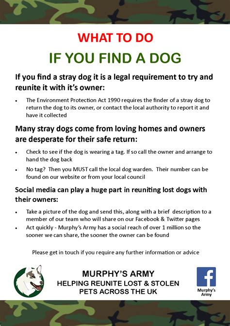 When Do You Buy by What To Do If You Find A Stray Murphy S Army