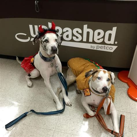 does petco sell dogs unleashed by petco 18 reviews pet shops 8843 villa la jolla dr san diego ca