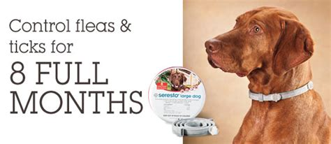 best flea and tick collar for dogs the 10 best flea collars in 2017 that offer lasting results s health