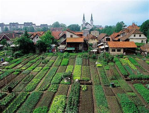 un report says small scale organic farming only way to feed the world grid world ecology enews
