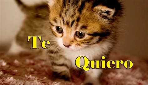 imagenes de te extraño gatitos 15 imagenes de gatitos muy lindas y 7 curiosidades