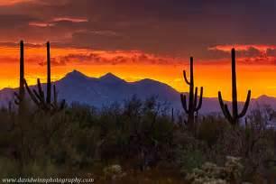 saguaro national park trip