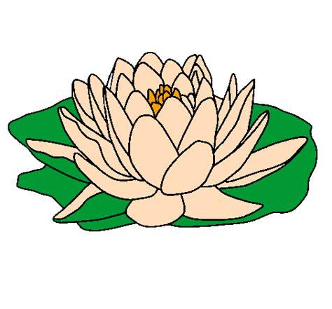 disegni fiore di loto disegno nymphaea colorato da utente non registrato il 31