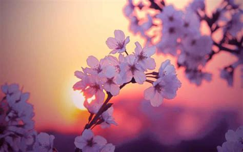 blooming flower undefined blooming flowers tumblr flower wallpaper