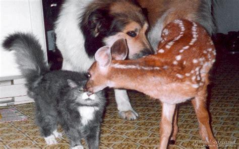 puppy friends friends dogs wallpaper 13985808 fanpop