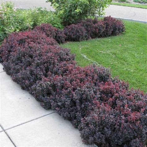 best 25 landscaping shrubs ideas on pinterest garden flower plants low water landscaping and