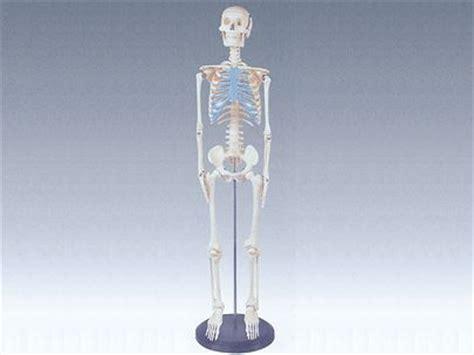 Offer Ensiklopedia Tubuh Manusia pudak scientific produsen alat peraga pendidikan dan peralatan laboratorium
