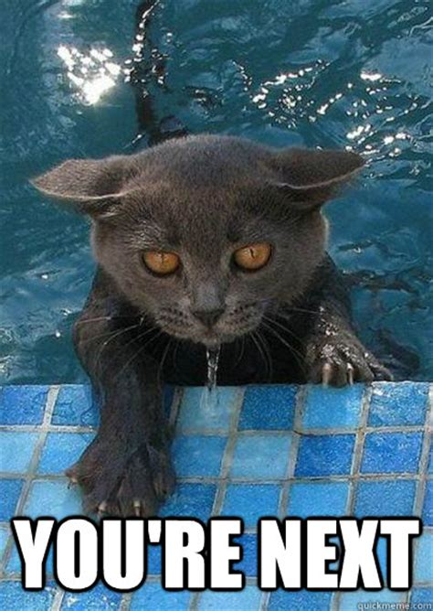 Wet Cat Meme - you re next wet cat quickmeme