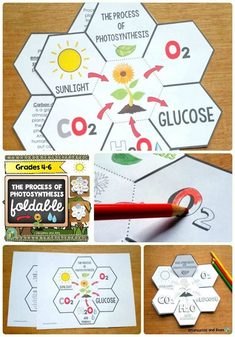 procedure of petals hairstyle 17 best images about tpt science lessons on pinterest