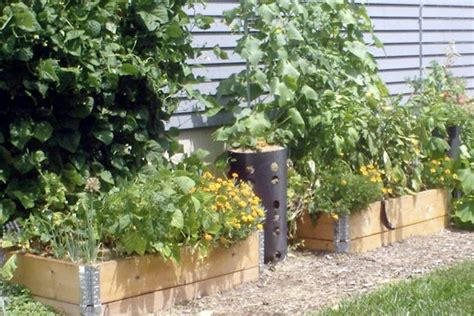 Home Gardening Tips Home Design And Decor Reviews Intensive Vegetable Gardening