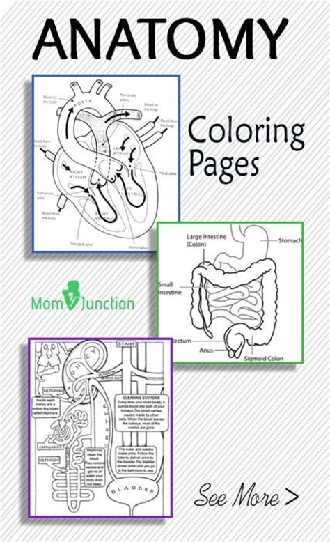 anatomy coloring book college free printable anatomy coloring pages
