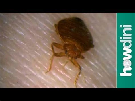 prevent  bed bugs infestation   check