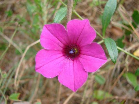 imagenes de flores ornamentales tipos de plantas ornamentales plantas