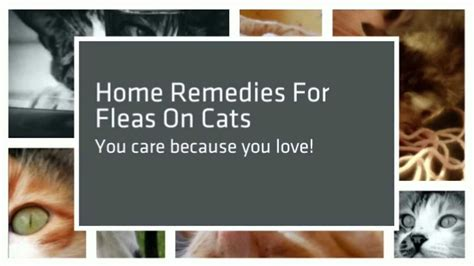 home remedies for fleas on cats and dogs dogs best medz