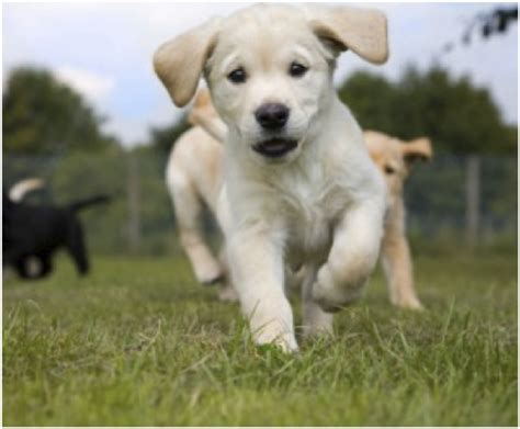 moving puppy moving puppies gallery