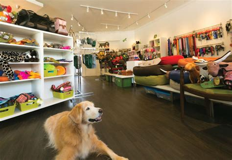 puppie store stylish pet store spotlight on kapahulu honolulu magazine august 2012 hawaii
