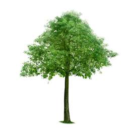 Meaning Of Trees by The Meaning And Symbolism Of The Word 171 Tree 187