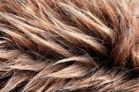 texture fur fur texture background background