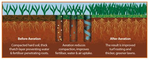 Lawn Care lawn care services amp treatments aeration greensleeves