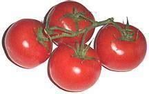 alimenti contengono molte fibre propriet 224 nutritive pomodoro innatia it