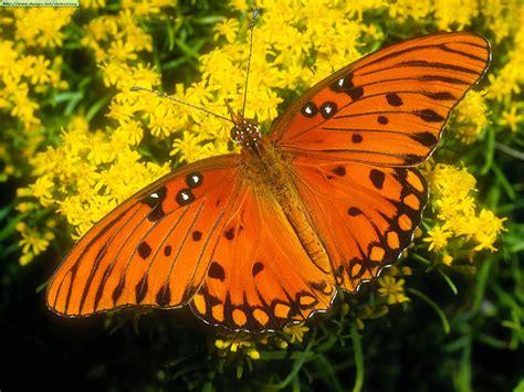 imagenes de varias mariposas fotografias de mariposas varias taringa