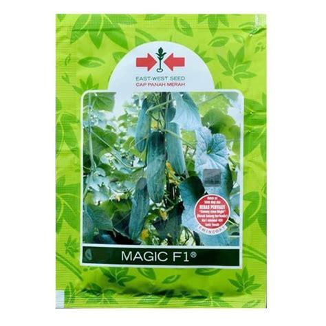 Bibit Timun Suri Panah Merah jual benih timun magic f1 800 biji panah merah bibit