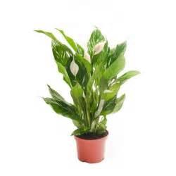 Plants In House House Plants Ebay