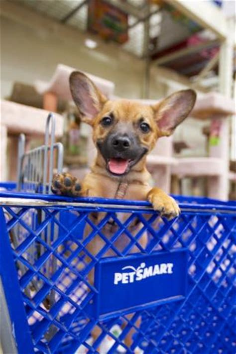 puppies at petsmart pet adoption programs partner with us petsmart charities