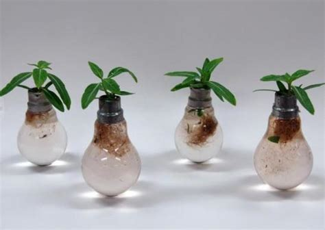 ten incredible planters created from old light bulbs