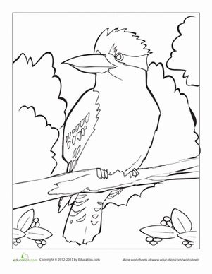 kookaburra coloring page free kookaburra worksheet education com