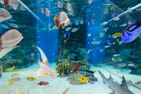 Hp Sony Aquarium 銀座に 沖縄の海 の水槽と 4k 映像 その他芸術 アート kas amのブログ yahoo ブログ