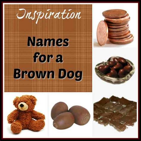 brown puppy names brown names for your chocolate pooch