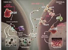 Role of mTOR | aRCC | AFINITOR® (everolimus tablets) Everolimus Mechanism Of Action