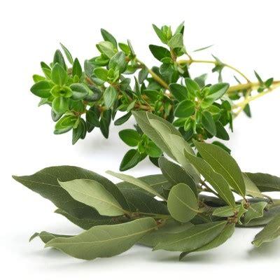 Sho Olive Herbal herbs de provence olive anacortes vinegar bar