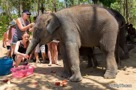 mission elephant rescue mission 1426318030 elephant jungle sanctuary phuket play with elephants in phuket phuket 101