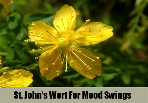 5 top herbal remedies for mood swings how to treat mood