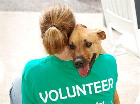 service dogs volunteer volunteer 171 humane society of catawba county