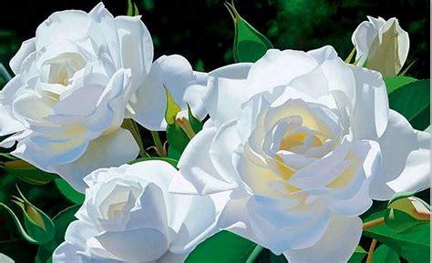 imagenes rosas hermosas animadas untitled imagenes de flores hermosas animadas