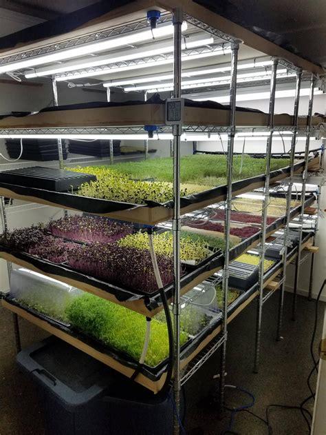 microgreens   grow room setup  working  swell