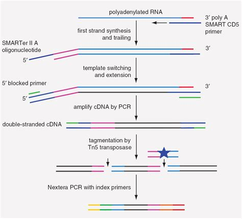 The Templates For Next Generation Sequencing Are Flash Card by Preparation Of Single Cell Rna Seq Libraries For Next